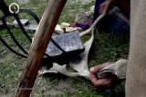 Osho Inipi Circle 21° anno - sabato: lo stone man porta le pietre